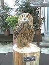 Bird2_1